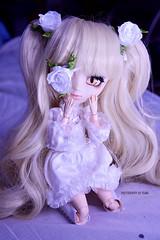 Kira | Pullip Kirakishou 2014 (Kumo~Milk^^) Tags: kirakisho kirakishou kirakishou2014 kira rewigged wig rechipped eyechips eyelashes obitsu doll stock stockoutfit junplanning groove gloss rozenmaiden