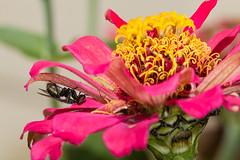 IMG_1294-2 1200 (Macrophotography and Close-up) Tags: flower flores bugs insetos insects macro closeup macrofotografia macrophotography jardim gardem nature natureza vida silvestre wildlife spider butterflies ladybug animal inseto ao ar livre