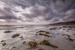 Seaweed shore (jillyspoon) Tags: seaweed shore coast beach monreith sand clouds galloway canon70d 70d seashore scotland wigtownshire emptybeach deserted incomingtide water irishsea sigma sigma1020mm 1020mm wideangledzoom horizon perspective solway solwayfirth lucebay bay frontbay f16 130 dumfriesandgalloway southwestscotland machars