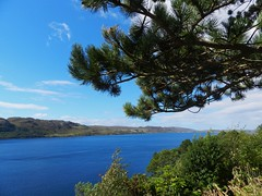 Loch Ewe from Inverewe Gardens, Wester Ross, August 2016 (allanmaciver) Tags: inverewe gardens loch ewe wester ross west coast tree blue sky long trees allanmaciver
