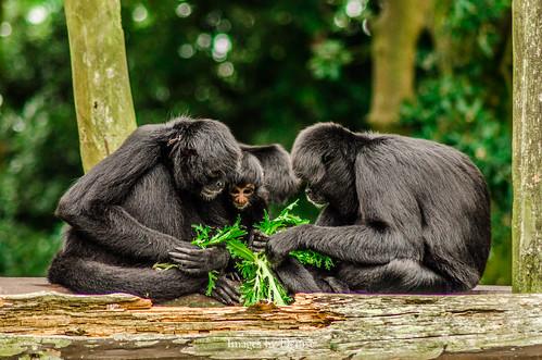Thumbnail from Fota Wildlife Park