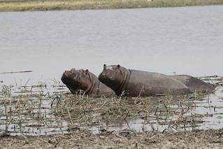 Namibia Dangerous Game Safari - Caprivi Strip 73