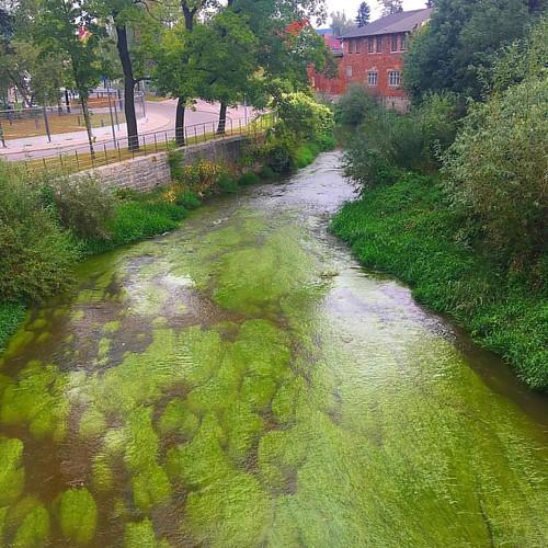 zielona rzeka
