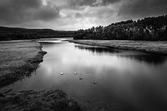 Sumava, Czech Republic (Khris72) Tags: blackwhite swamp lake forest sky swan river nature country side reflection dark