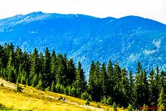 Credeai c suntei singuri !?!?!? (Don Costello) Tags: lupeni straja hunedoara romania munte ski natura aer curat afine partie nikon d3300 valcan retezat godeanu transilvania