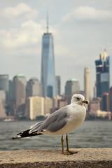 Elis Island (LG_92) Tags: newyork bigapple ny usa 2016 september nikon d3100 dslr seagull bird animal manhattan skyline worldtrade