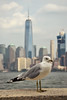 Elis Island (LG_92) Tags: newyork bigapple ny usa 2016 september nikon d3100 dslr seagull bird animal manhattan skyline worldtrade