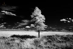tetons_2016_26web (Jessica Haydahl Photography) Tags: grand teton national park wyoming tetons mormon row john molton barn apsens fall colors infrared photography nikon d810 d7000 pentax 645z medium formate landscape ansel adams