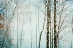 Snow Flurries (KimFearheiley) Tags: blue winter snow tree landscape photography snowflakes aqua branch flurries february wintertime blizzard winterphotography