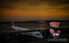 POTD 17 February 2013: Beni - deported (Ian M Butterfield) Tags: bear sunset building plane buildings airplane toy toys airport spain europe european teddy aircraft air bears transport eu objects aeroplane potd plush transportation teddybear tenerife es teddies teddybears cuddlytoy softtoy espania beni cuddlytoys softtoys cuddlies