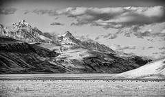 elk refuge.tetons (jk.photos) Tags: trees winter bw snow clouds rural landscape blackwhite nikon wildlife bigsky wyoming elk tetons jacksonhole jacksonwy nationalelkrefuge nikon70200 d700 bigmountains