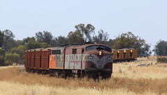 GM36 and S302 round the bend as they approach the junction of the Hopetoun branch line in Murtoa (bukk05) Tags: hamilton hopetoun sclass iluka elzorro s302 murtoa gmclass commonwealthrailways gm36 mineralsands