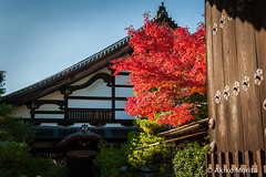 Konpuku-ji Temple, Kyoto, Japan,  (Akiko Morita) Tags: travel autumn light holiday inspiration plant flower history love nature japan architecture garden landscape temple photography japanese photo kyoto image gardening vibrant joy picture jardin historic momiji serenity   romantic meditation    inspirational maples  horticulture  japon     sensation                        myoshinji