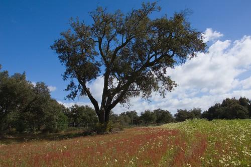 Antelejo country side ©  Still ePsiLoN