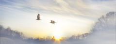 Heaven (HOWLD) Tags: sunset seagulls fog canon heaven howd oaklandlake oaklandgardens uploadedviaflickrqcom 5dmiii howardlaudesign