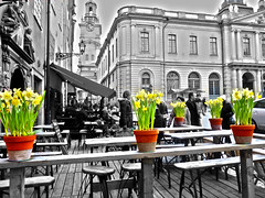 Urban Bloom (Richard Cartawick) Tags: flowers sweden stockholm gamlastan sverige scandinavia daffodils stockholmoldtown veniceofthenorth