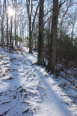 "Mountain Laurel Trail in snow • <a style=""font-size:0.8em;"" href=""http://www.flickr.com/photos/92887964@N02/8516213456/"" target=""_blank"">View on Flickr</a>"