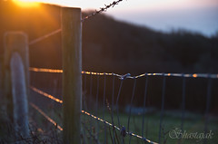 As Day Breaks (Shastajak) Tags: light sunlight sunrise fence dawn wire pentax bokeh barbedwire posts sunup daybreak k5 fenceposts tamron18250mm fencefriday pentaxk5