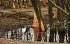 NOT (beta karel) Tags: light reflection tree green nature water netherlands forest canon landscape wildlife reflected nibble flevoland oostvaardersplassen 2013 40d ©betakarel