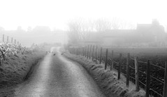 64 of 365 Misty (linlaw39) Tags: winter blackandwhite bw white bird oneaday field weather birds fence mono scotland countryside blackwhite aberdeenshire 365 day64 fraserburgh lindal 2013 365project march2013 day64365 3652013 2013yip canonpowershotsx260hs 365the2013edition 05032013