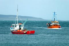 Kirkwall fishing boats (Craig Taylor - Orkney) Tags: boats bay fishing orkney lobster kirkwall creel buoyant
