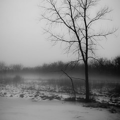 Fog Over Frozen Pond 001 (noahbw) Tags: trees winter bw mist snow monochrome misty fog forest square landscape blackwhite woods nikon foggy explored hellernaturecenter d5000 noahbw
