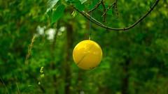 Yellow ball (irina.neustroeva) Tags: blue summer sun tree green nature lamp yellow ball painting logo paint ballon pixar titles redstar