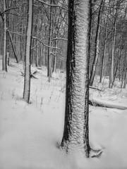 Bare Trees (DAJanzen) Tags: snow baretrees winterwonderland inthewoods jonduerrforestpreserve inthemiddleofthestorm rollinghillside alongthefoxriver iphoneography iphone4s