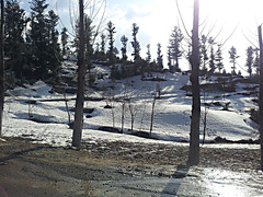 Up in the Clouds (khalil yousufzai) Tags: trees pakistan sky snow tree beauty clouds cool altitude hills