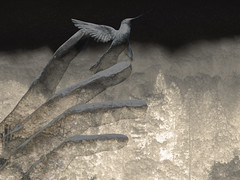 Mystic Flight (bethrosengard) Tags: photomanipulation digitalart photoart digitallyenhanced hss digitalmagic bethrosengard
