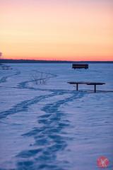 Following the footsteps.. (Kasia Sokulska (KasiaBasic)) Tags: winter sunset lake snow canada nature beauty evening nationalpark alberta elkisland astotin