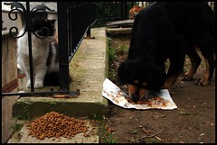Cat Food (Artun York) Tags: dog cat turkey pentax ngc trkiye streetphotography istanbul 1855 taksim kedi galata kpek k7