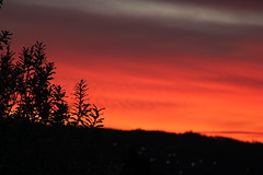Another red night (Renee BB) Tags: sunset silhouette brilliantred