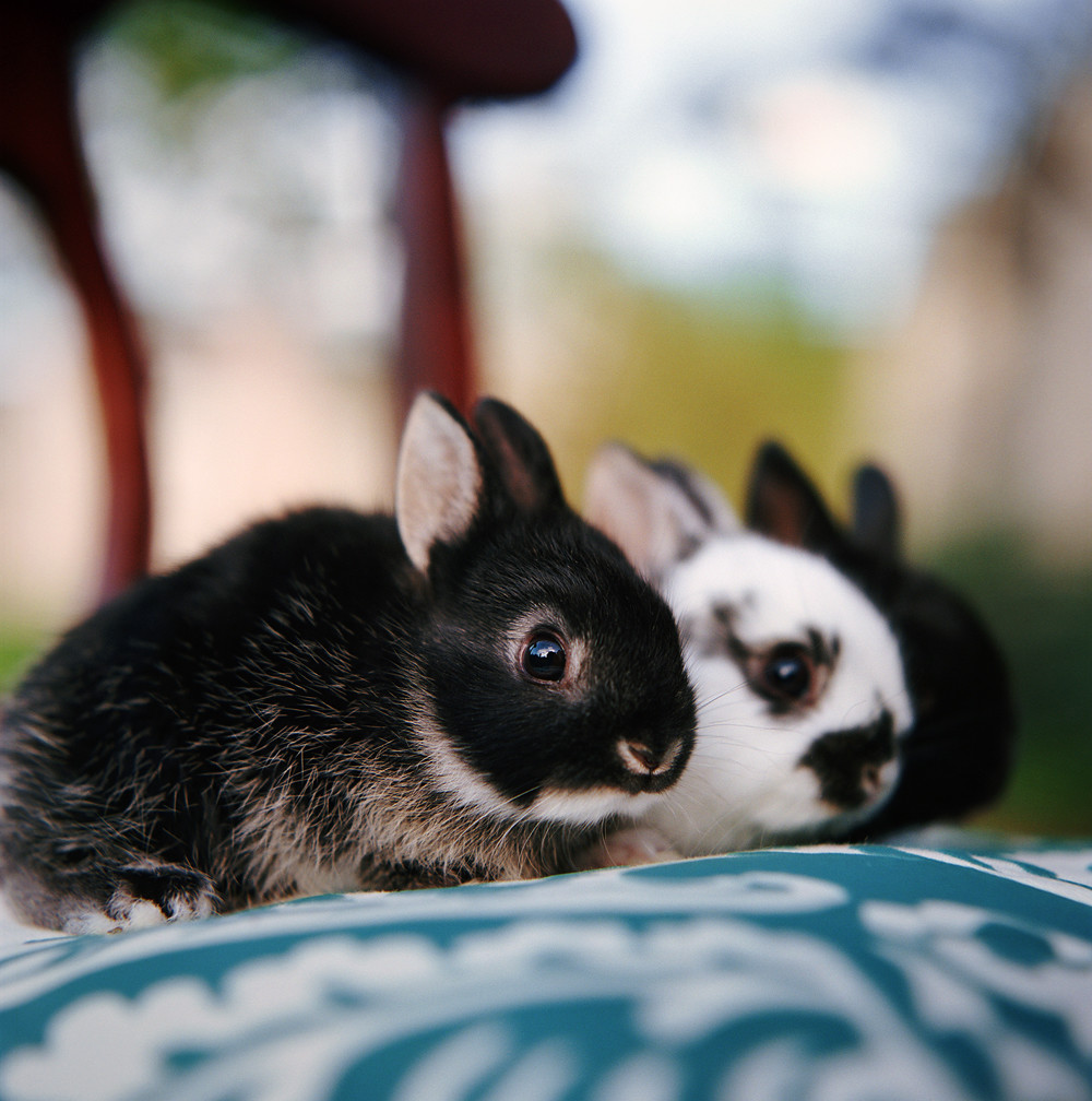 the world u0027s best photos of bunny and hasselblad flickr hive mind