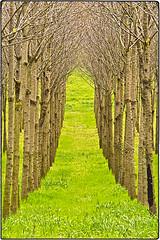 ... SDIM3253 (*melkor*) Tags: trees green art grass rain forest season geotagged countryside spring hill experiment artificial row hills rows raining melkor almostaspringsensation treesrows aseasonsawarenessproject