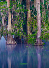 Spring dawn at Lake Martin (Gerard Plauche) Tags: trees nature water birds sunrise outdoors dawn spring wildlife swamp cypress lakemartin gsccc