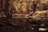 seuss creek (greg westfall.) Tags: bravo texas seuss infrared lifepixel comanchecounty gregwestfall theenchantedcarousel 590nm gregwestfallphotography