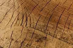 Hirnholz rissig - End Grain (gripspix (OFF)) Tags: wood plant texture nature cut natur pflanze rough holz endgrain rau textur hirnholz sgerau 20130414