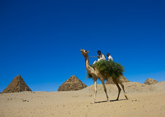 Kids On A Camel In Front Of The Royal Pyramids Of Napata, Nuri, Sudan (Eric Lafforgue) Tags: africa travel blue sky history archaeology cemetery rock horizontal landscape outdoors temple photography sand ancient day child desert pyramid northafrica soedan sudan sunny unescoworldheritagesite transportation copyspace nuri ancientcivilization 2people twopeople nubia thepast position necropolis ruined soudan rockformation tranquilscene saharadesert northernafrica traditionalclothing realpeople traveldestinations colorimage famousplace lookingatcamera jalabiya fulllenght oldruin lowangleview aridclimate childrenonly  egyptianculture physicalgeography szudn napata sudo  northernsudan placeofburial northsudan blackpharaohs      xuan eri7502