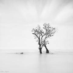 Keep Holding On (Danial Abdullah (Away at sea)) Tags: longexposure trees sea bw cloud white seascape black tree beach canon blackwhite long cloudy bs serenity slowshutter passion danial minimalism minimalist calmness waterscape luminosity canon1022mm longexp gnd canon7d bigstopper luminancemask 09gnds danialabdullah