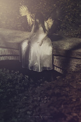 tristetea vehementa (Rain...) Tags: light fall girl sadness tristeza wings model darkness cuento angels alas archangel fairytales eternal angelical ngel arcngel rainphotography luisflopezphotography tristeteavehementa