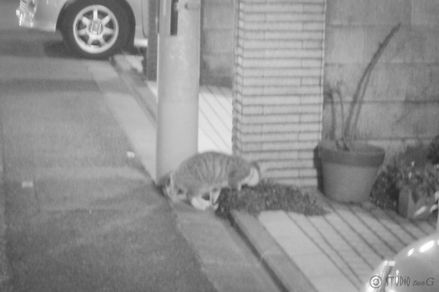Today's Cat@2013-04-19