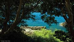 Ligurian sea (Crupi Giorgio (official)) Tags: italia liguria genova nervi mare rocce alberi costa paesaggio canon canoneos7d sigma sigma1020 estate italy sea reef trees coast seascape landscape relax summer