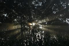 _MG_8752 (grzegorz_63) Tags: sun sunrise mist sunbeams trees canon70d