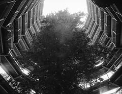 Baumwipfelpfad (Christian Güttner) Tags: blackandwhite bw baum schwarzweis schwarzweisfotografie sw svartvitt summer tyskland kodak kodak400tx mecklenburgvorpommern monochrome mediumformat mittelformat moerschecodeveloper niemcy natur nature natura niebo analog analogue 120 645 6x45 lato licht light deutschland drzewo zenzabronica umwelt outdoor europa etrs ecodeveloper rollfilm tree träd film germany heaven himmel krajobraz czarnobiale camera baumwipfelpfad