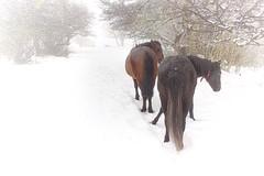 Cerro Chapelco. (Ariel NZ) Tags: caballos nieve cerro esfumado