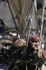 Roses (Sarah Devaux) Tags: roses pot cordes blanc ciel rose bateau voilier port marina suspension florale filet bassin à flots base sousmarine bordeaux