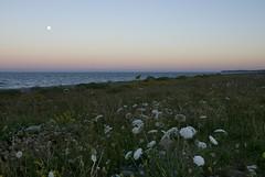 18071605 Newcastle (Philip D Ryan) Tags: ireland countywicklow newcastle newcastlebeach irishsea skyscape seascape eveninglight sunset wicklowhead moon fullmoon moonrising moonrise