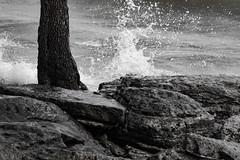 Erie Splash (K.G.Hawes) Tags: coast erie greatlakes lake lakeerie plant rock rocks rocky splash splashing tree trees water wave waves black white blackandwhite bw monochrome monochromatic marblehead