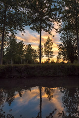 On the river (mathieuo1) Tags: sunset green venice poitevin swamp marsh lake river color reflexion great landscape tree nature dawn summer france europe sky clouds blue orange 500px mathieuo nikon dlsr
